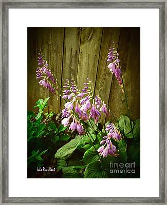 Blooming Hostas Framed Print by Julie Dant