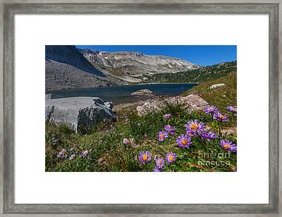 Blooming In Snowy Range Framed Print