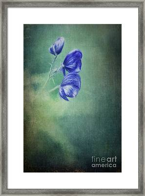 Blooming In The Dark Framed Print by Priska Wettstein
