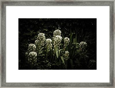 Framed Print featuring the photograph Blooming In The Shadows by Marco Oliveira