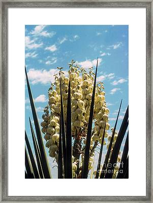 Blooming In The Sky Framed Print