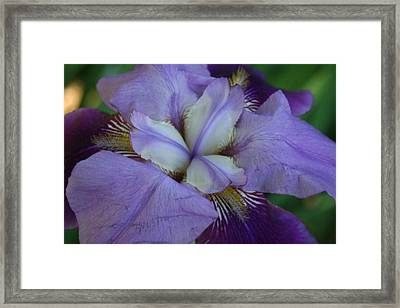 Framed Print featuring the digital art Blooming Iris by Barbara S Nickerson