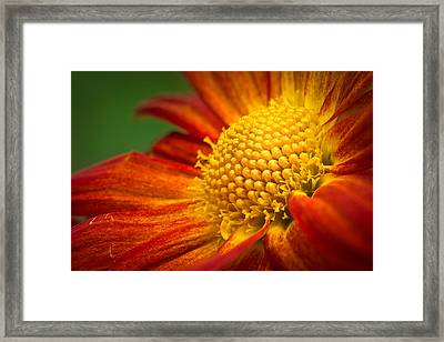 Blooming Framed Print by Lutz Baar