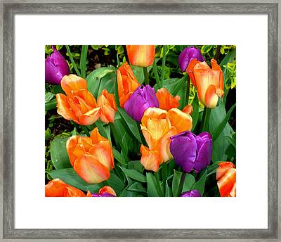 Framed Print featuring the photograph Blooming Multitude by Lynda Lehmann