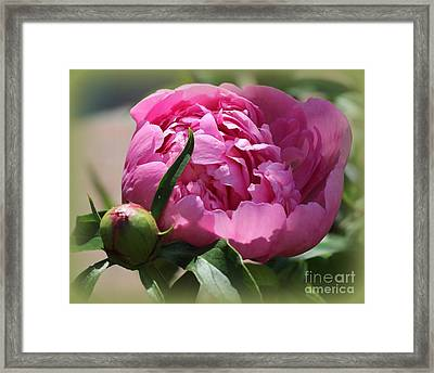 Blooming Pink Peony Framed Print by Dora Sofia Caputo Photographic Art and Design
