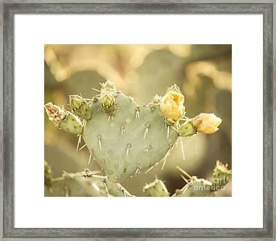 Blooming Prickly Pear Cactus Framed Print by Juli Scalzi