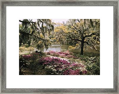 Blooming Shrubs And Trees Framed Print by B. Anthony Stewart