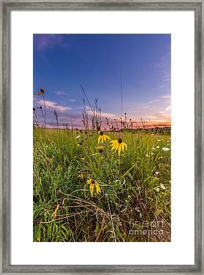 Blooming Sunset Framed Print