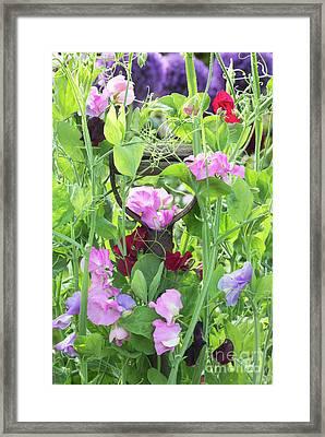 Blooming Sweet Peas Framed Print by Tim Gainey