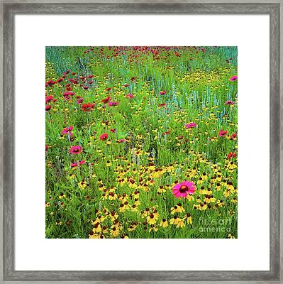 Blooming Wildflowers Framed Print