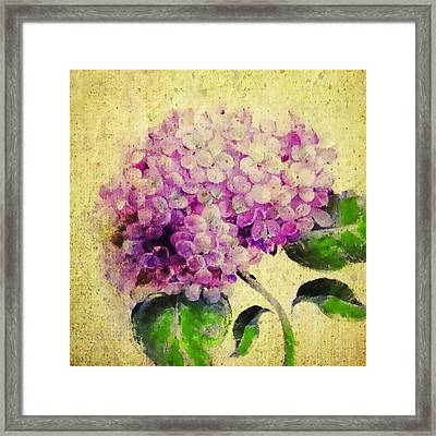 Blooming With Happiness - Hydrangea Framed Print
