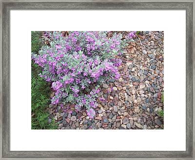 Blooms Framed Print by Mordecai Colodner