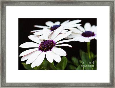 Blooms Of Three Framed Print by Lori Dobbs