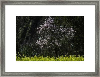 Bloosming Tree In Mustard Grass Framed Print