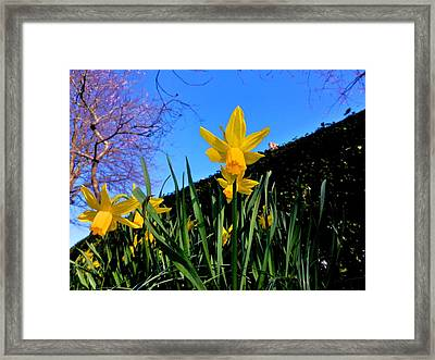 Blossom And Narcissus  Framed Print