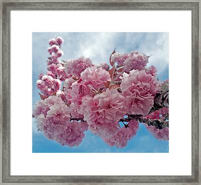 Framed Print featuring the photograph Blossom Bliss by Gwyn Newcombe