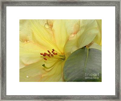 Framed Print featuring the photograph Blossom by Erica Hanel