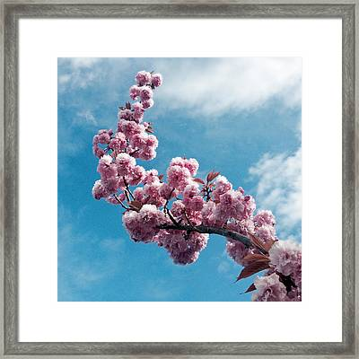 Framed Print featuring the photograph Blossom Impressions by Gwyn Newcombe