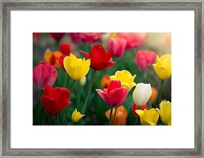 Blossom Framed Print by Johan Hakansson