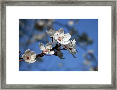 Blossom Framed Print by Martina Fagan