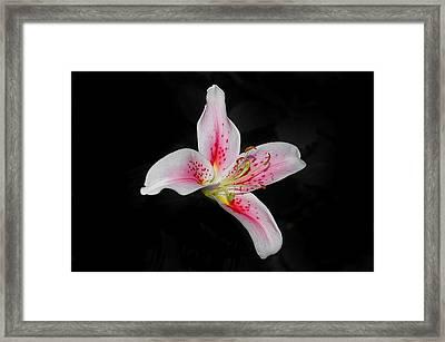 Blossom On Black Framed Print