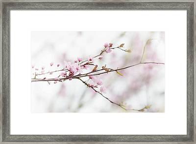 Framed Print featuring the photograph Blossom Pink by Rebecca Cozart