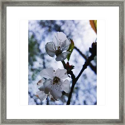 #blossom #spring #macro #flower #pretty Framed Print by Natalie Anne