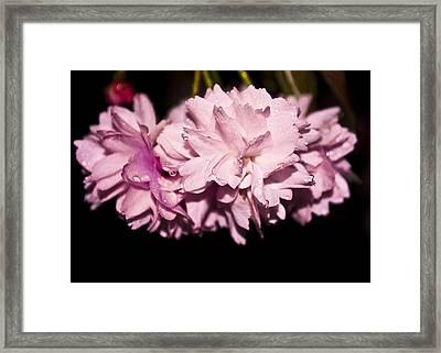 Blossom Framed Print by Svetlana Sewell