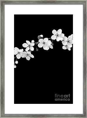 Blossom Framed Print by Tim Gainey