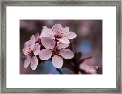 Blossom Trio Framed Print