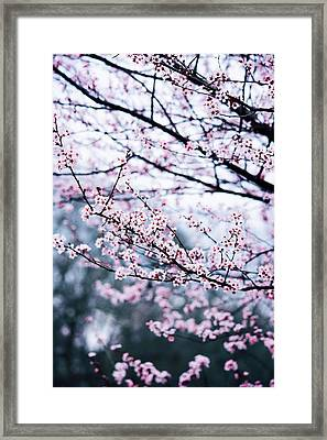Framed Print featuring the photograph Blossoming Buds by Parker Cunningham