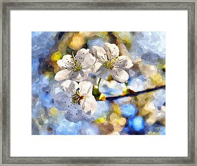 Blossoming Cherry And Morning Sunlight Watercolor Framed Print
