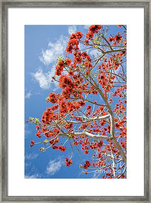 Blossoming Coral Tree Framed Print by Julia Hiebaum