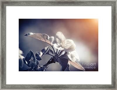 Blossoming Framed Print
