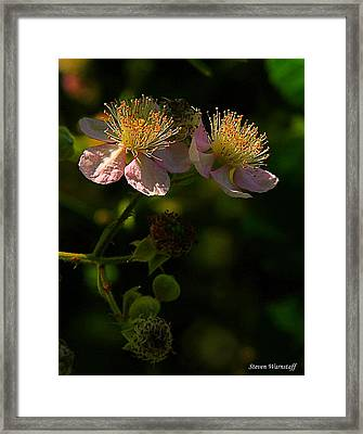Blossoms 3 Framed Print