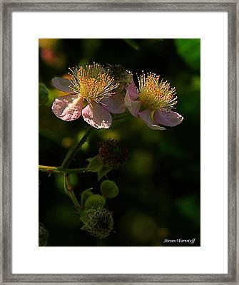 Blossoms 3 Framed Print by Steve Warnstaff