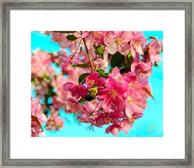 Blossoms And Bees Framed Print