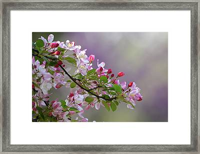 Framed Print featuring the photograph Blossoms And Bokeh by Ann Bridges