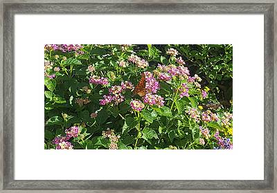 Blossoms And Wings #2 Framed Print by Rachel Hannah