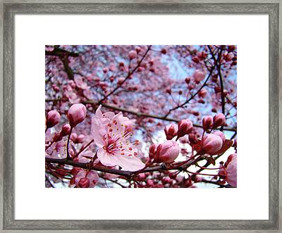 Blossoms Art Blue Sky Spring Tree Blossoms Pink Giclee Baslee Troutman Framed Print by Baslee Troutman