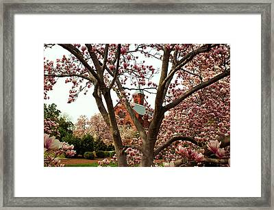 Blossoms At The Castle Framed Print by Frank Garciarubio