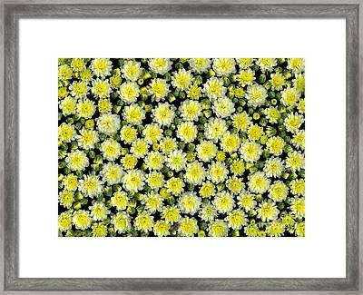 Blossoms Framed Print by Christian Slanec