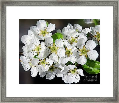 Framed Print featuring the photograph Blossoms by Elvira Ladocki
