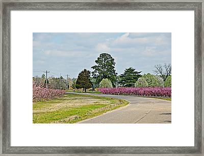 Blossoms Everywhere Framed Print by Linda Brown