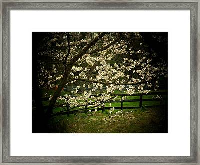 Blossoms Fence Framed Print by Michael L Kimble