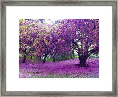 Blossoms In Central Park Framed Print