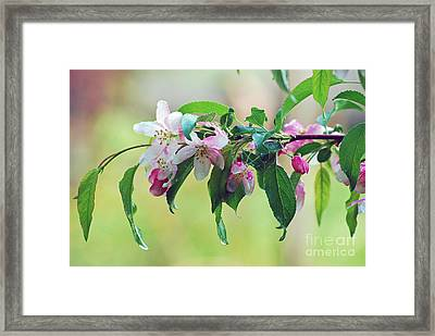 Framed Print featuring the photograph Blossoms In Spring by Lila Fisher-Wenzel