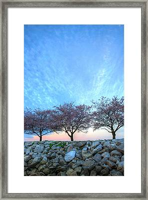 Blossoms Framed Print by JC Findley