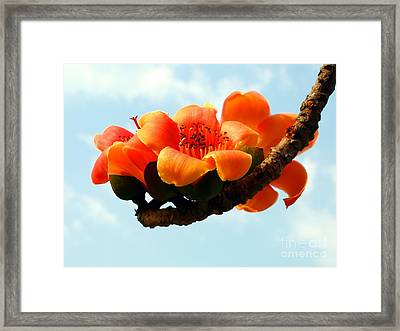 Blossoms Of The Red Silk Cotton Tree Framed Print by Yali Shi