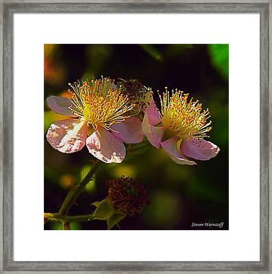 Blossoms.1 Framed Print by Steve Warnstaff
